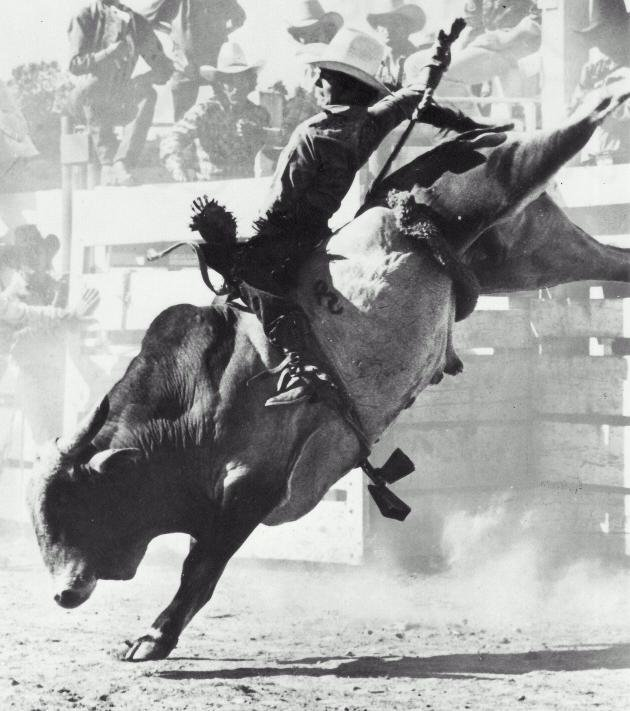 Rodeo Real Gay Cowboys and Brokeback Mountain – Patricia Nell.