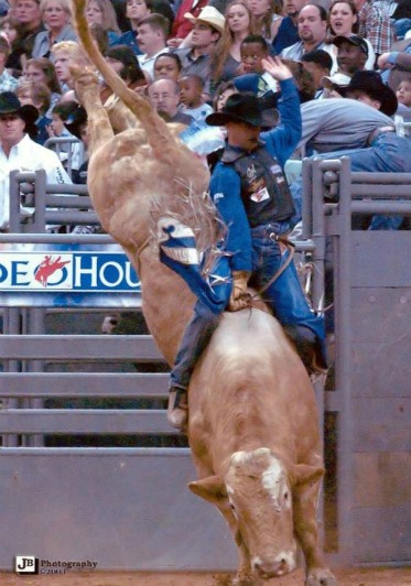 bull riding, the ride of your life essay Bull riding is an extreme sport with serious life threatening risks but have little   in bull riding there are three major times when head injuries can occur  before  the event ride, after the ride and at all other times, is when the.